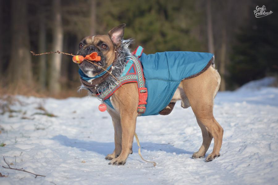 Französische Bulldogge Mantel Hundemantel Jacke Winter Schnee Hundekleidung