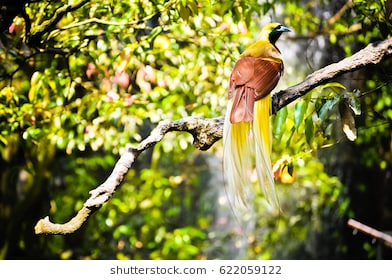 9700 Koleksi Gambar Hewan Burung Dewata Terbaru