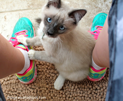 Fergus the kitten with my shoes