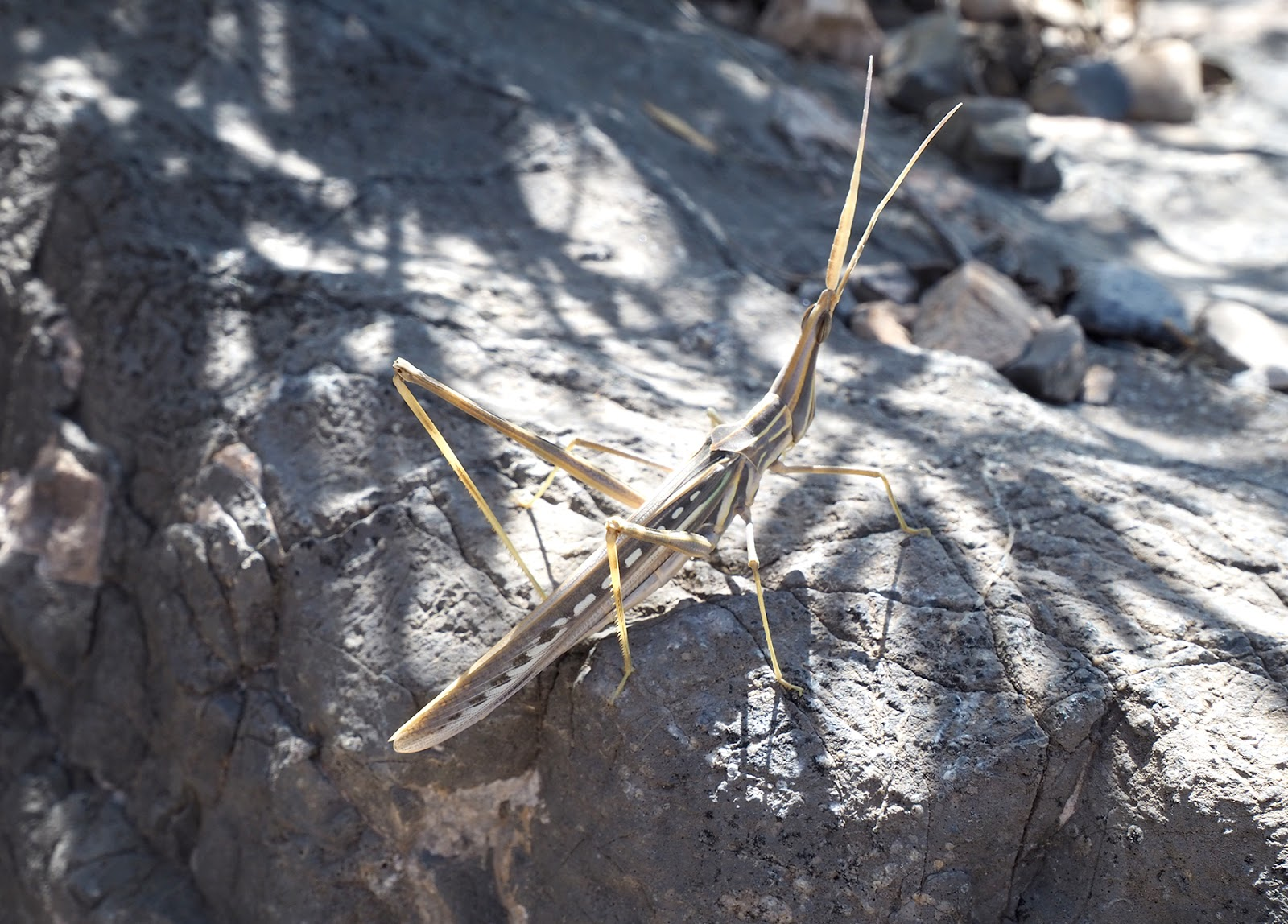 Euriental | luxury travel & style | stick insect, Oman