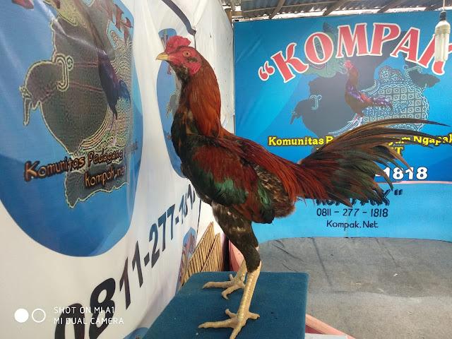 Resep Ampuh Cara Membuat Jamu Ayam Aduan Alami