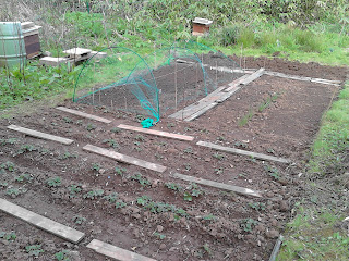 Allotment prepared