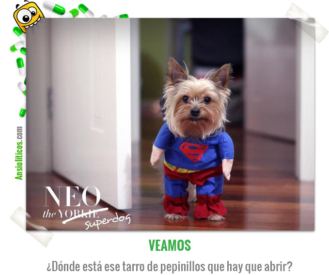 Chiste de Animales Super Perro