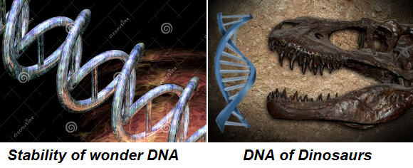 stability of DNA and of dinosaur www.anthropologist.co.in k n reddy
