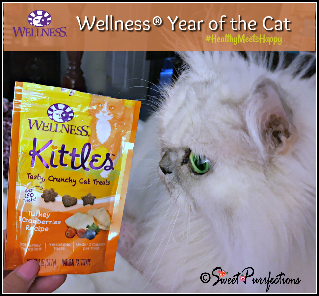 Truffle and the Wellness Kittles Cat Treats