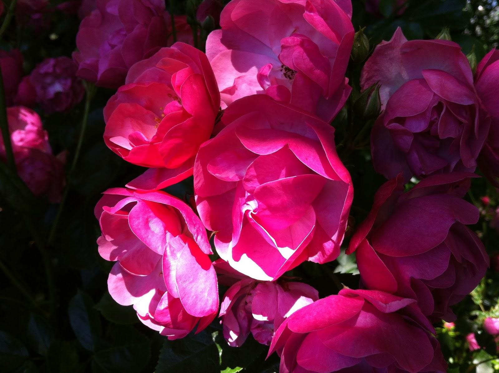 Nicht Nur Bei Garten Produkten Wie Werkzeugen Oder Zubehör, Sondern Auch  Bei Den Pflanzen Selbst. Versandgärtnereien Mit Ihren Pflanzenkatalogen  Gibt Es ...