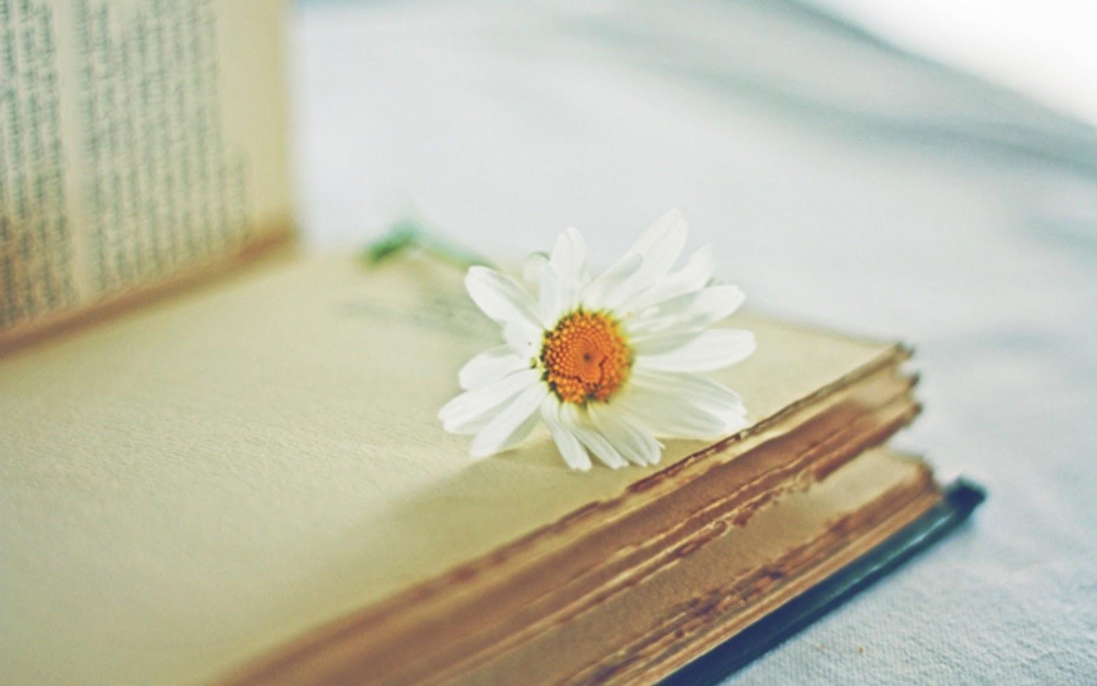 أجمل خلفيات زهور, خلفيات زهور, Wallpapers of Flowers,Wallpapers , Beautiful Flowers Wallpapers, Flowers Wallpapers, خلفيات
