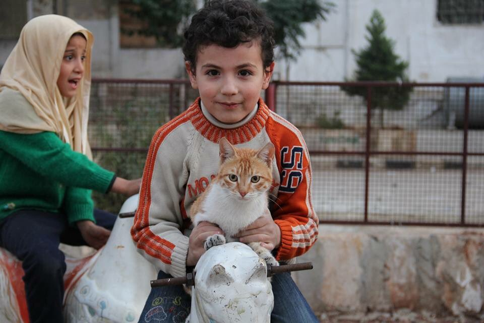 Mohammad Alaa Aljaleel and the cats of Aleppo