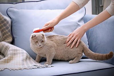 Why Cat Grooming is Very Important For Your Pet