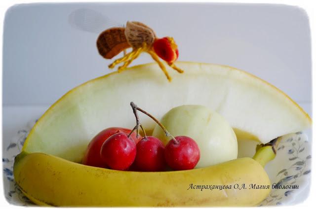 пальчиковый театр, дрозофила на фруктах