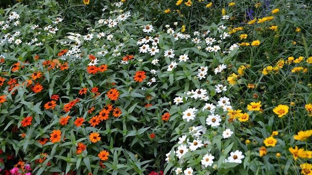 Bloemenveld met bloemen in alle kleuren