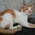 Mata Kucing Dicungkil, Pengguna Laman Sosial Berang