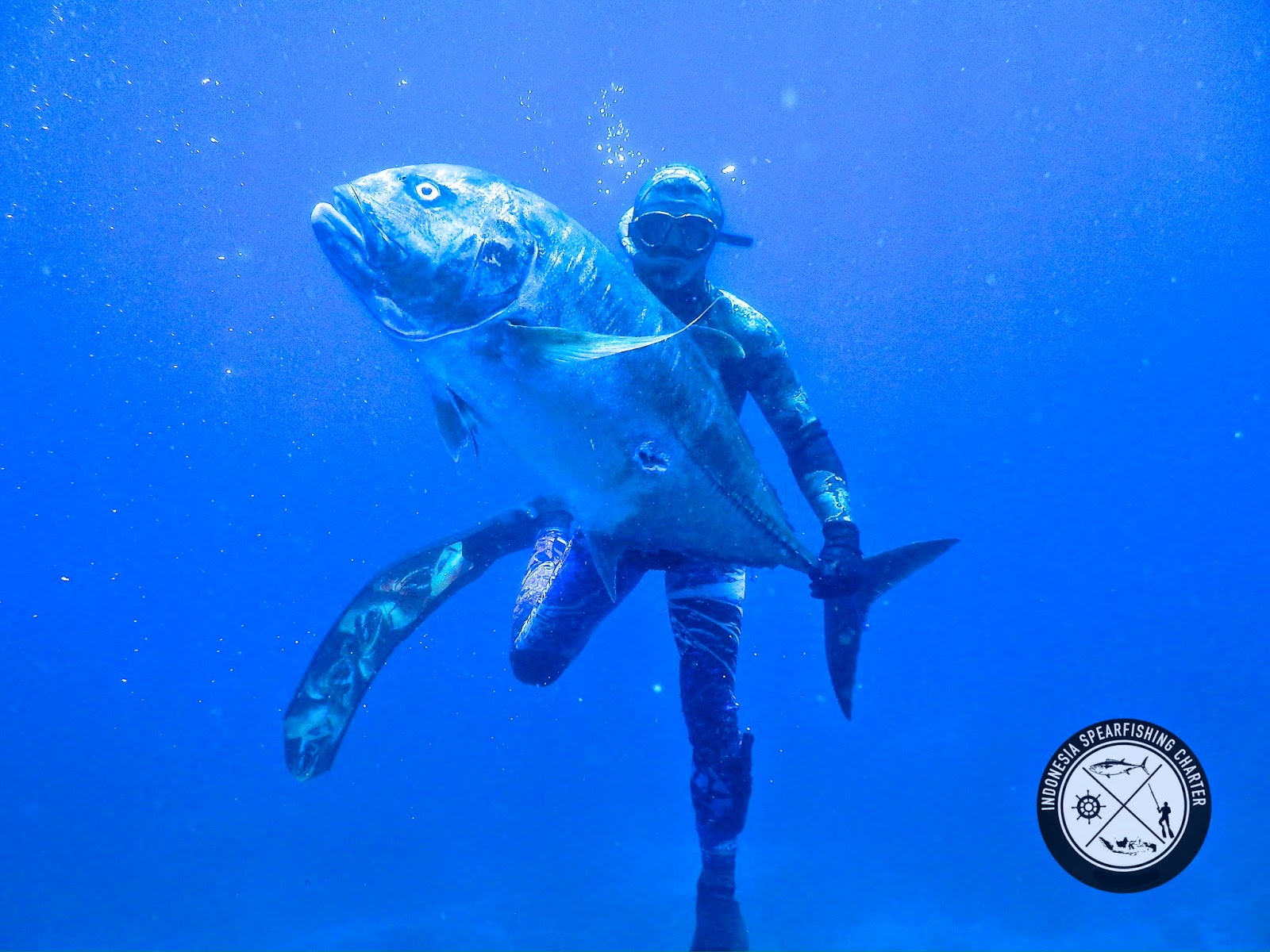 Spearfishing Bali Indonesia, Nusa Penida , Amed GT, Giant Trevally, Dogtooth Tuna, Parrotfish, Coronation Trout, Bluefin Trevally, Black Trevally, Mu, Barracuda, Mu, Maori Seaperch, rainbow runner
