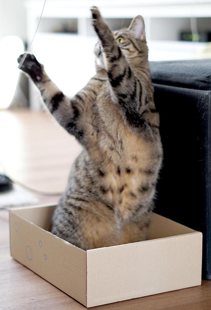 aentschies blog ideen und tipps f r tolle katzenspiele. Black Bedroom Furniture Sets. Home Design Ideas