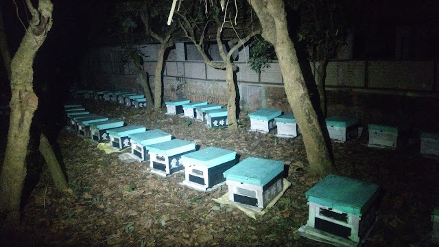 推廣台灣純蜂蜜,龍眼蜜,蜂蜜檸檬,蜂花粉,蜂王漿,等蜂產品,產品經SGS檢驗,提供天然純淨,安全的蜂產品是愛蜂園的唯一宗旨03-5563939