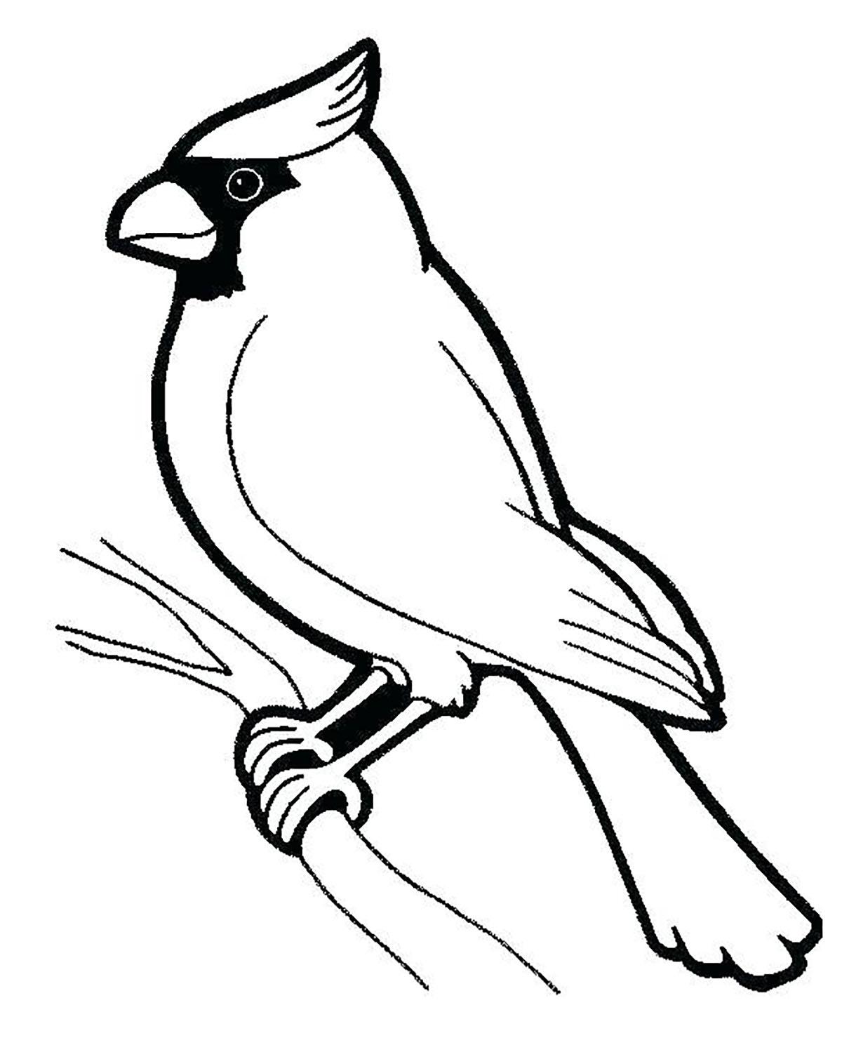 Tranh tô màu con chim đậu trên cành