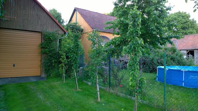 Säulenobstbäume nach  dem Sommerschnitt (c) by Joachim Wenk