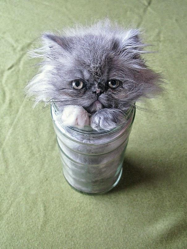 kucing dalam botol aqua