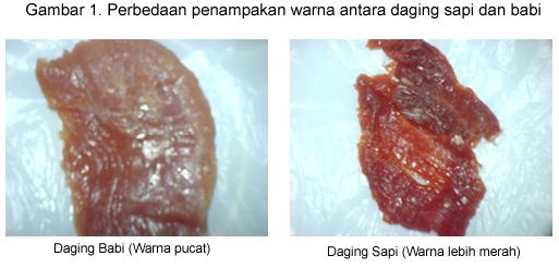 Cara Membedakan Daging Sapi dan Daging Babi
