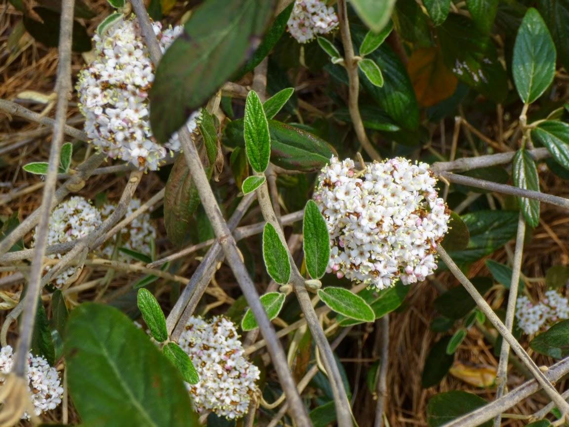 新的爱彩网和布拉格荚膜上的花朵都没有被晚期冻结损坏