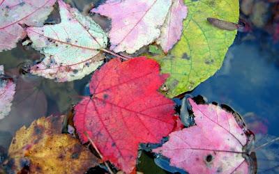 hojas-flotando-en-el-agua