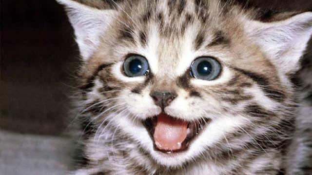 Jangan diusir Saat Kucing datang Mendekati Kamu ketika Makan, Ini Tiga Pesan Penting Dari Nabi