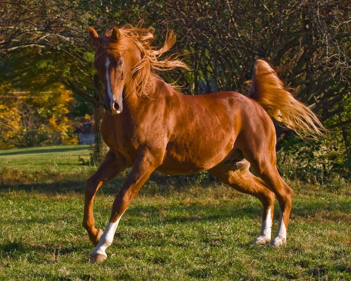 奔馬,奔走中的馬。《文選.枚乘.七發》:「沌沌渾渾,強壯。