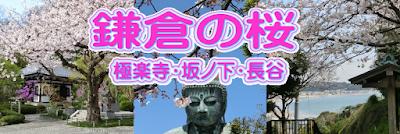 鎌倉:極楽寺・坂ノ下・長谷の桜