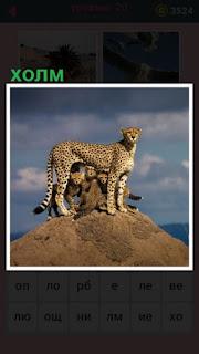 на холме стоит леопард со своим потомством