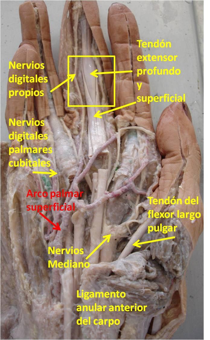La anatomía es bella: IMAGEN 21 RESPUESTA