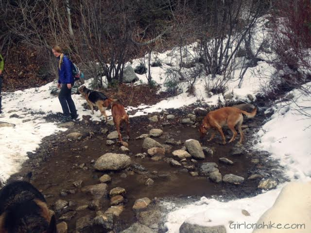 Hiking to Horsetail Falls, Utah, Hiking in Utah with Dogs