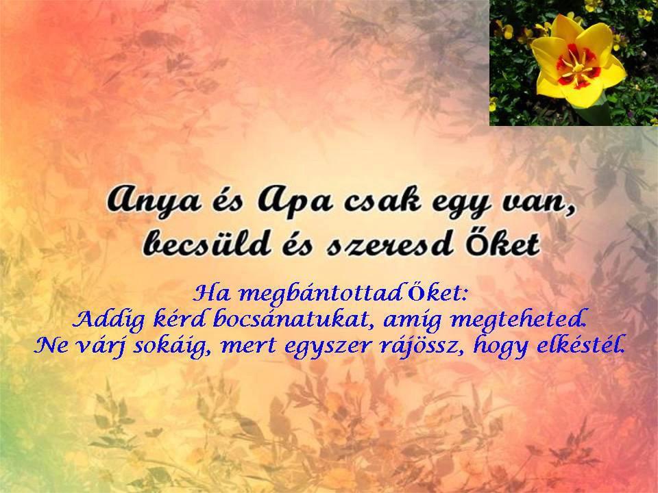 apa csak egy van idézetek Minden egy helyen: Anya és Apa csak egy van !!