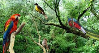 Posee Sonora el 52% de las aves en el país