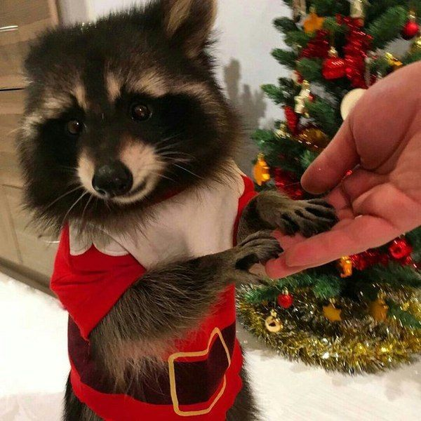 Funny animals of the week - 6 January 2017, cute animal pic, animal images