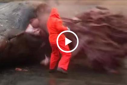 Video Saat Perut Ikan Paus Raksasa di Bedah, Isinya Mencengangkan, Jangan Ditonton Jika Tak Berani!