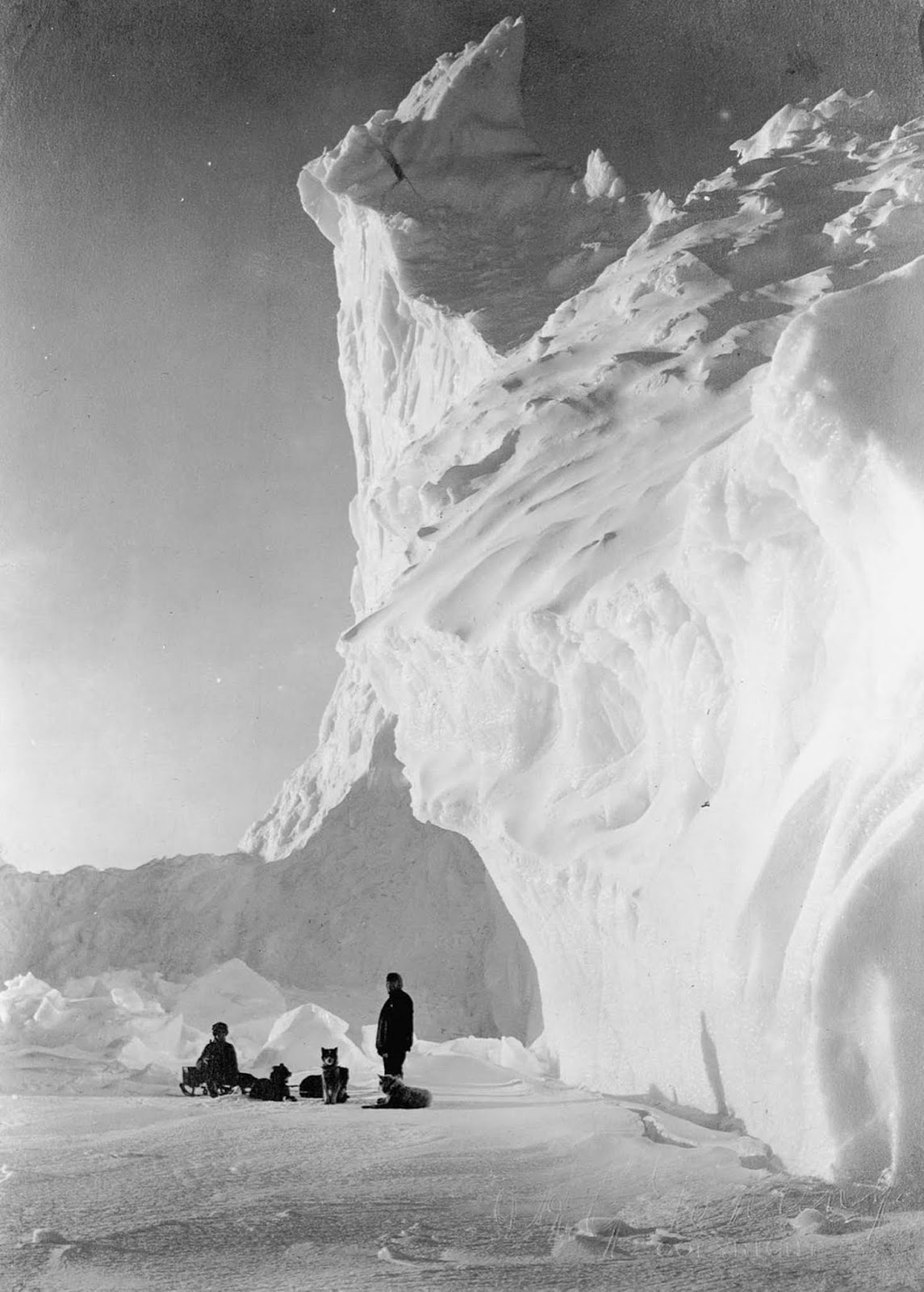 A dog team rests by an iceberg. 1911.