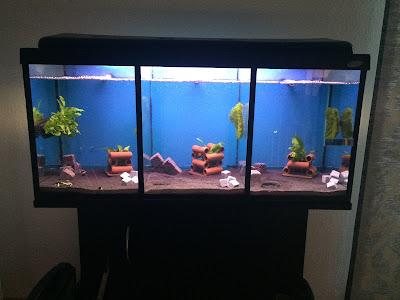 http://knutsgarnelen.de/2016/05/gastbeitrag-aquarium-teilen.html