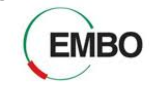 European Molecular Biology Organisation Postdoctoral Fellowship