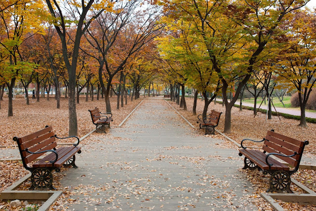 Mùa thu tại một công viên ở Hàn Quốc