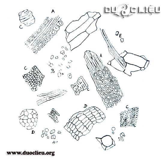 Một số đặc điểm bột Cam thảo
