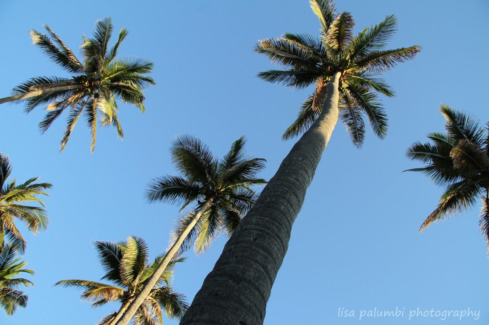 La Famiglia I Love Palm Trees
