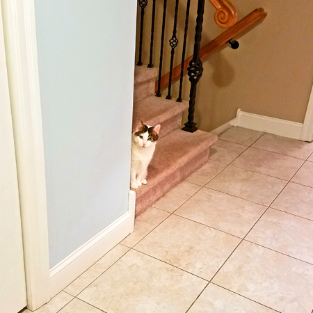 image of Olivia the White Farm Cat sitting on the stairs, peeking around the corner