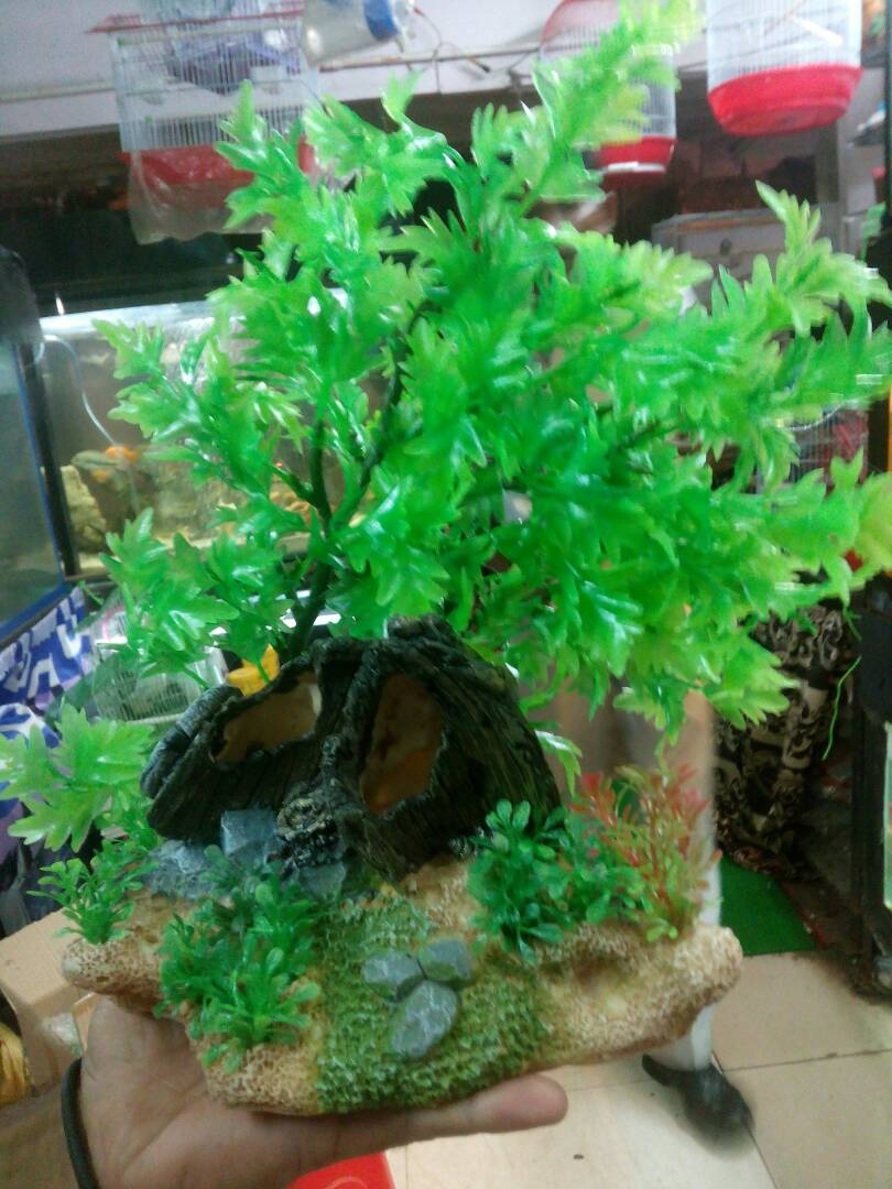 Joe 39 s aquaworld for exotic fishes mumbai india 9833898901 for Aquarium decoration online