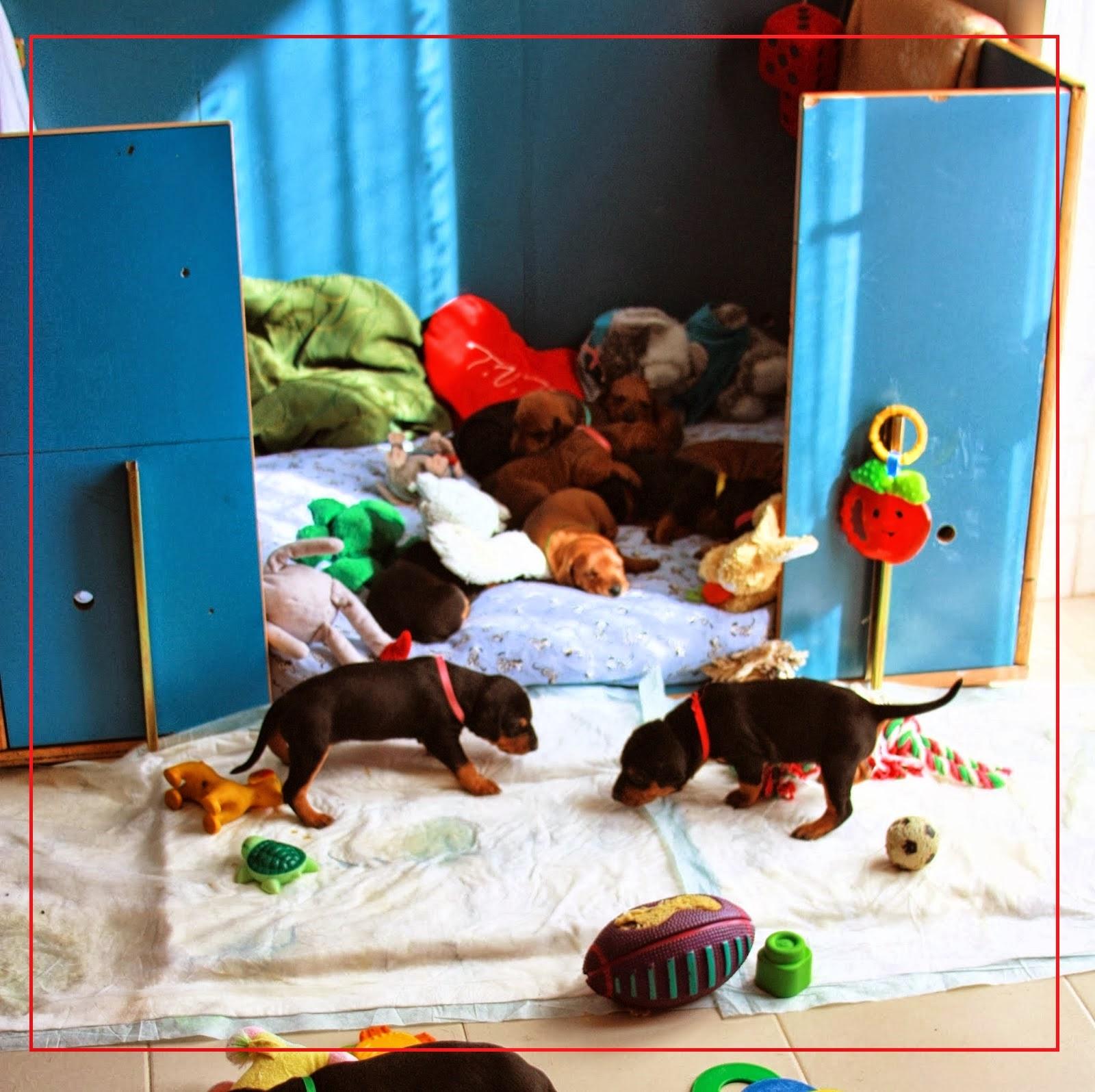 http://unforgettablypinscherallevamento.blogspot.it/