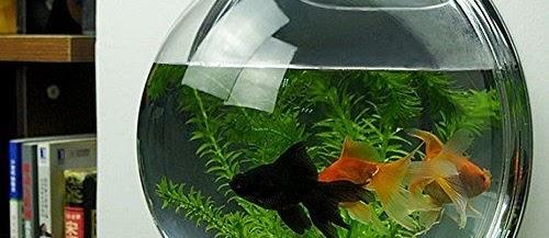 Harga Aquarium Mini Bulat