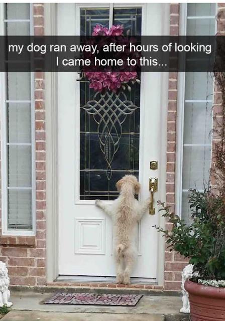 Best Dog Memes Viral Online