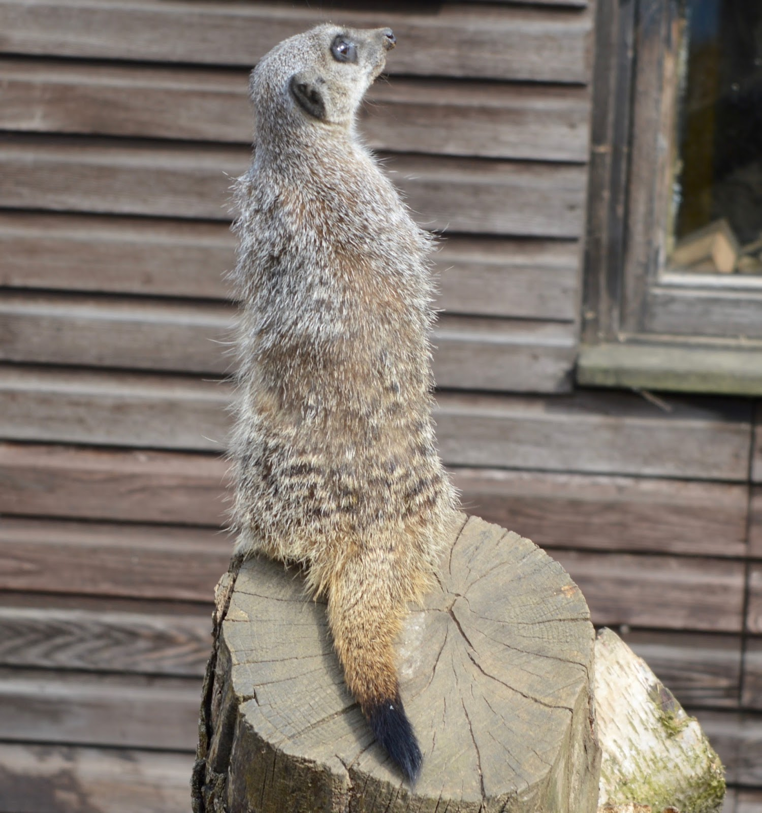 Birthday Parties at Whitehouse Farm in Northumberland | What to expect & review - meerkats
