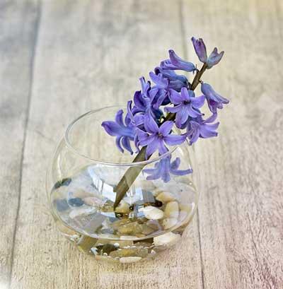 setangkai bunga dalam toples berisi air