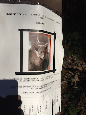 Lost cat poster in Bergamo.