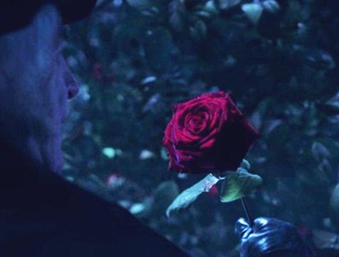 La rosa que provoca el conflicto en La Bella y la Bestia - Cine de Escritor